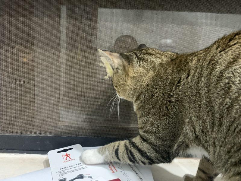 スクスク育った猫