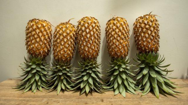 逆さにして保管しているパイナップル