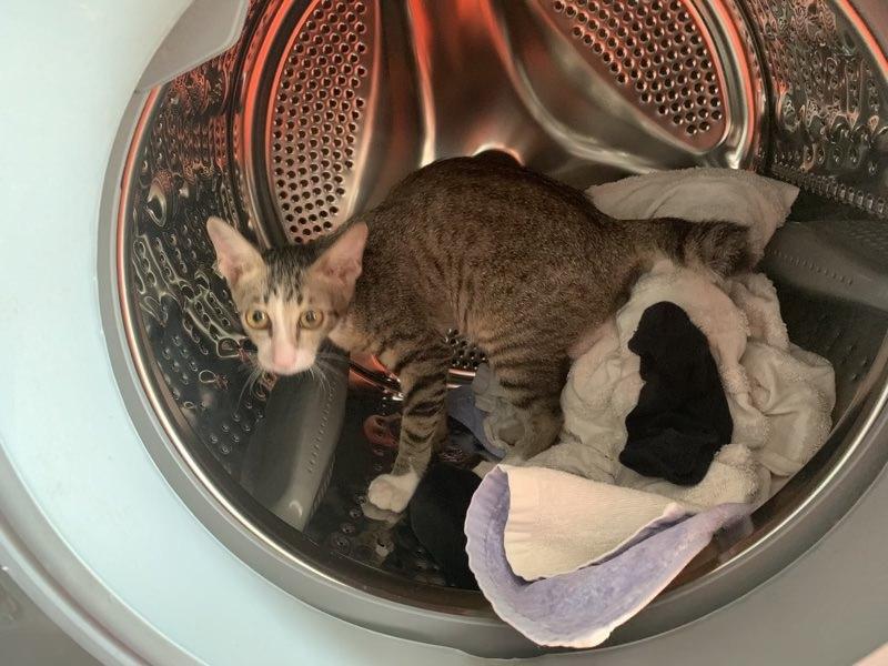 二人暮らしの洗濯頻度